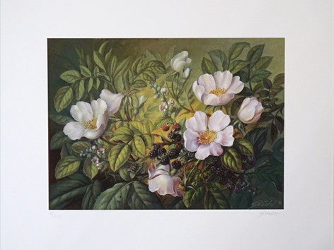 Heckenrose/Brombeeren