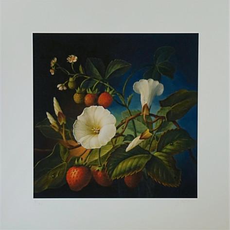 Trichterwinde/Erdbeere