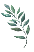 Top Corner Watercolor Leaf- PNG.png