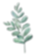 watercolor leaf 1.png