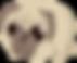 Pugi the Pug