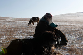 """Tsogbayar Khorol, 49 watches his livestock with his herding dog, Arslan, 16, by his side in the Bornuur province on New Years Day, 2019. Khorol lives about two hours outside of Ulaanbaatar, the capital of Mongolia. He owns around 300 heads of livestock, which consists of cows, sheep and goats. He makes money off of selling their milk to the nearby town of Bornuur. Arslan is a Bankhar dog, which are a Mongolian landrace used as herding dogs dating back to the time of Genghis Khan. """"I traded Arslan for 40 male goats,"""" said Tsogbayar. """"Before I had Bankhars, wolves would come into the fence and take the livestock. After getting Bankhars, we haven't lost any animals to the wild beasts."""""""