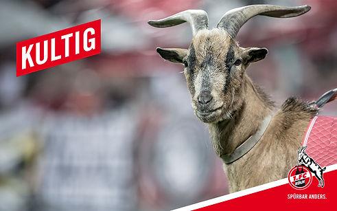 comevis - FC Köln - akustische Markenführung - Soundbranding - Audio Voice - Hennes FC