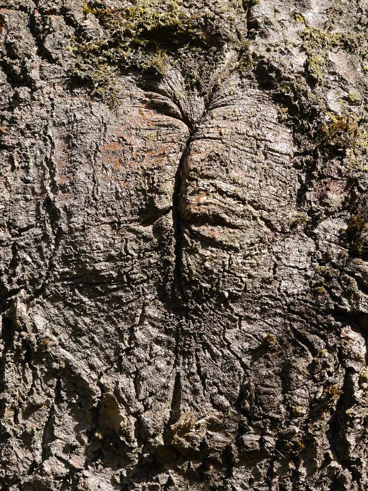 Mein Freund, der Baum