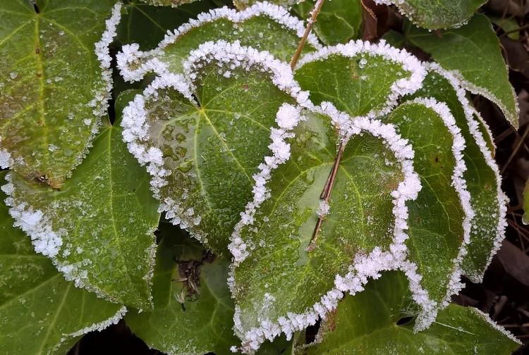 naturKUNST Frostige Zeiten