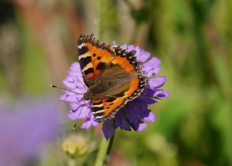 """Wandel """"Schmetterling"""""""