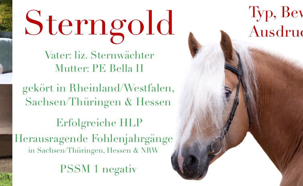 Deckanzeige Sterngold