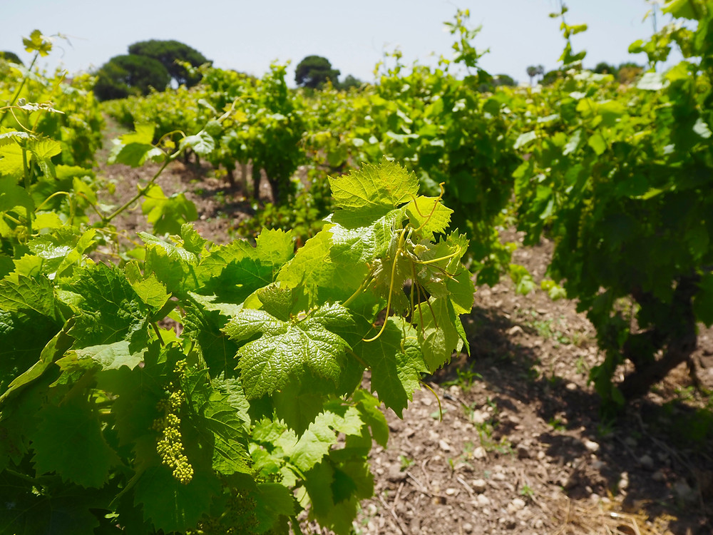 marsala-sicily-things-to-do-wine-tasting-1