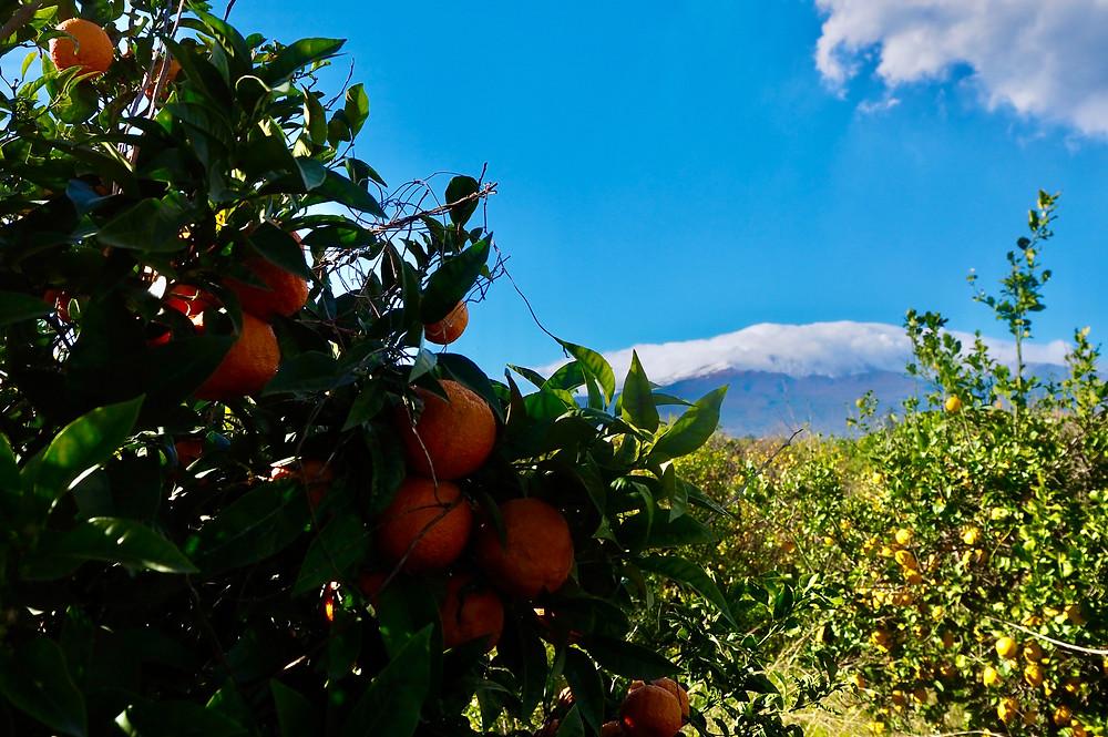 sicily-blood-oranges-etna