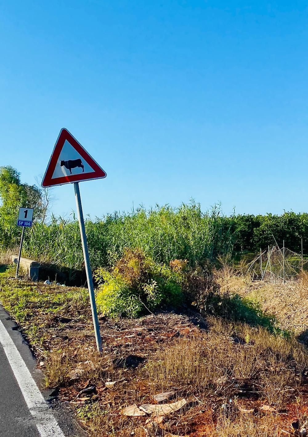 sicily-driving-road-hazards