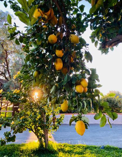 Flavors of Sicily | Lemon Heaven