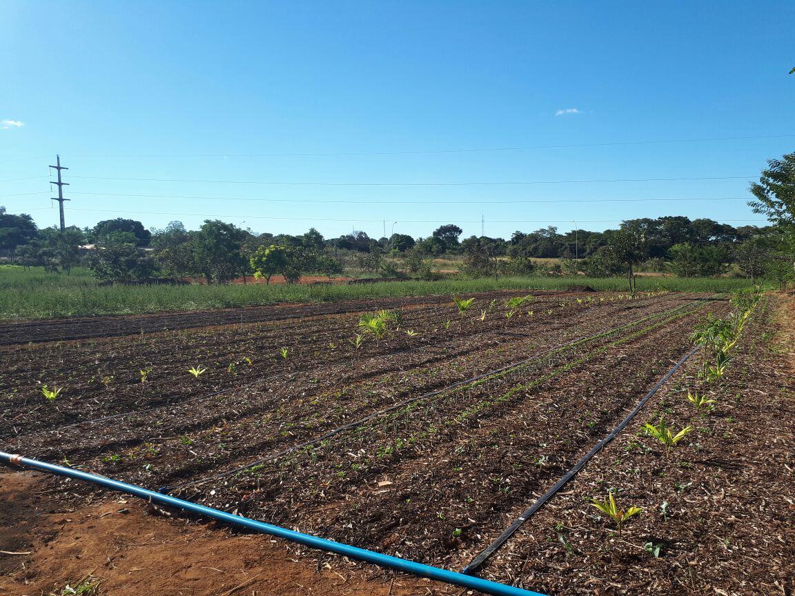 Agro - talhão 4 (7)