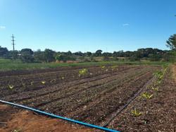 Agroflorestal (6)