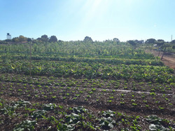 Agro - talhao 3 (2)