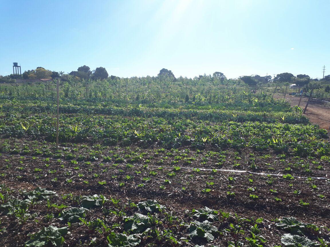 Agro - talhao 3 (15)
