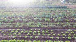Agro - talhao 3 (19)
