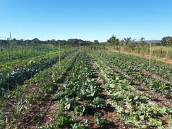 Agro - talhao 3 (12)