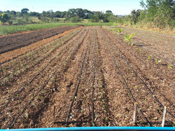 Agroflorestal (5)