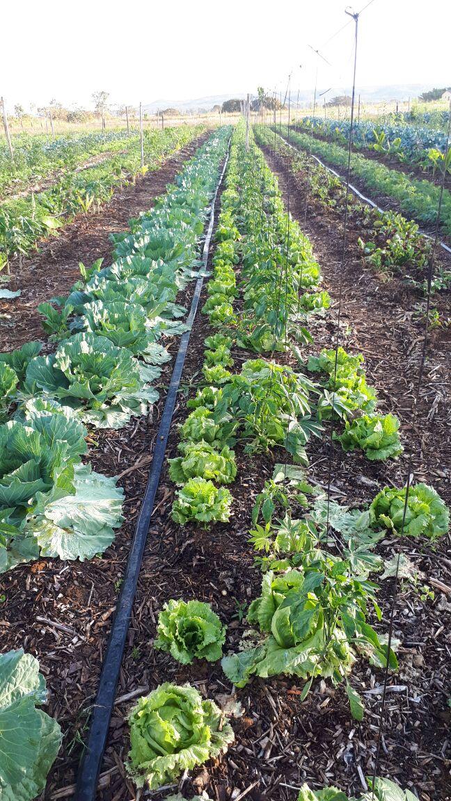 Agro - talhao 3 (18)