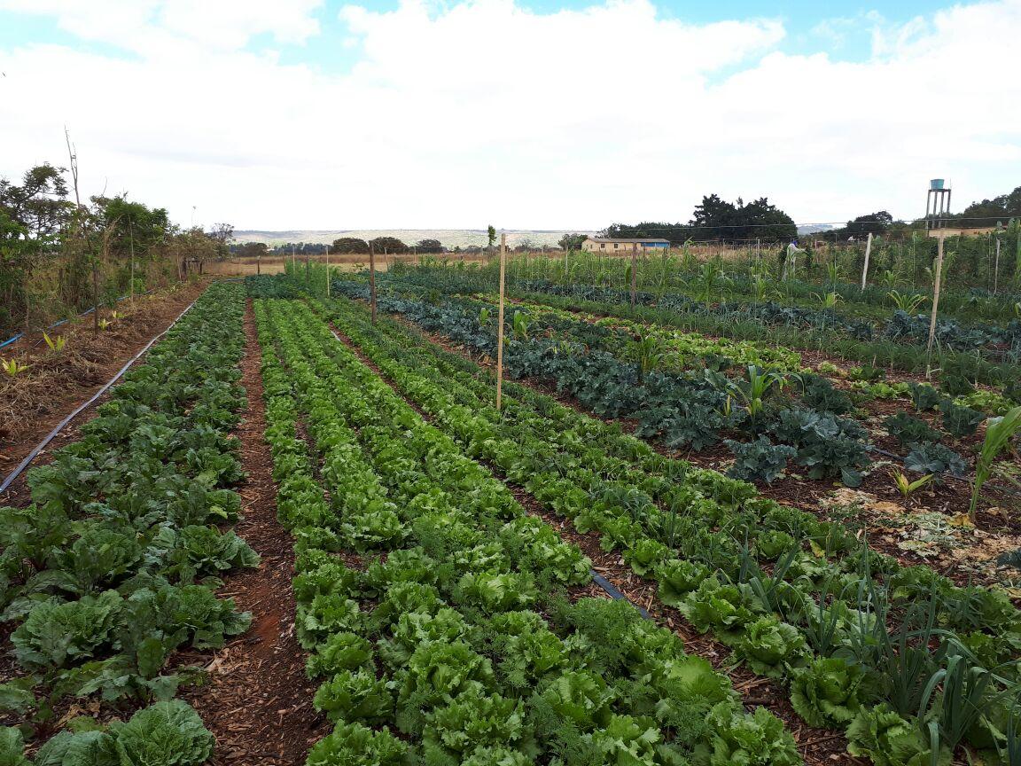 Agro - talhao 3 (11)