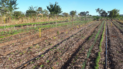 Agro - talhão 4 (3)
