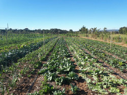 Agro - talhao 3 (8)