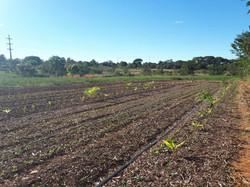 Agroflorestal (7)