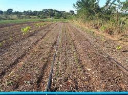 Agro - talhão 4 (9)