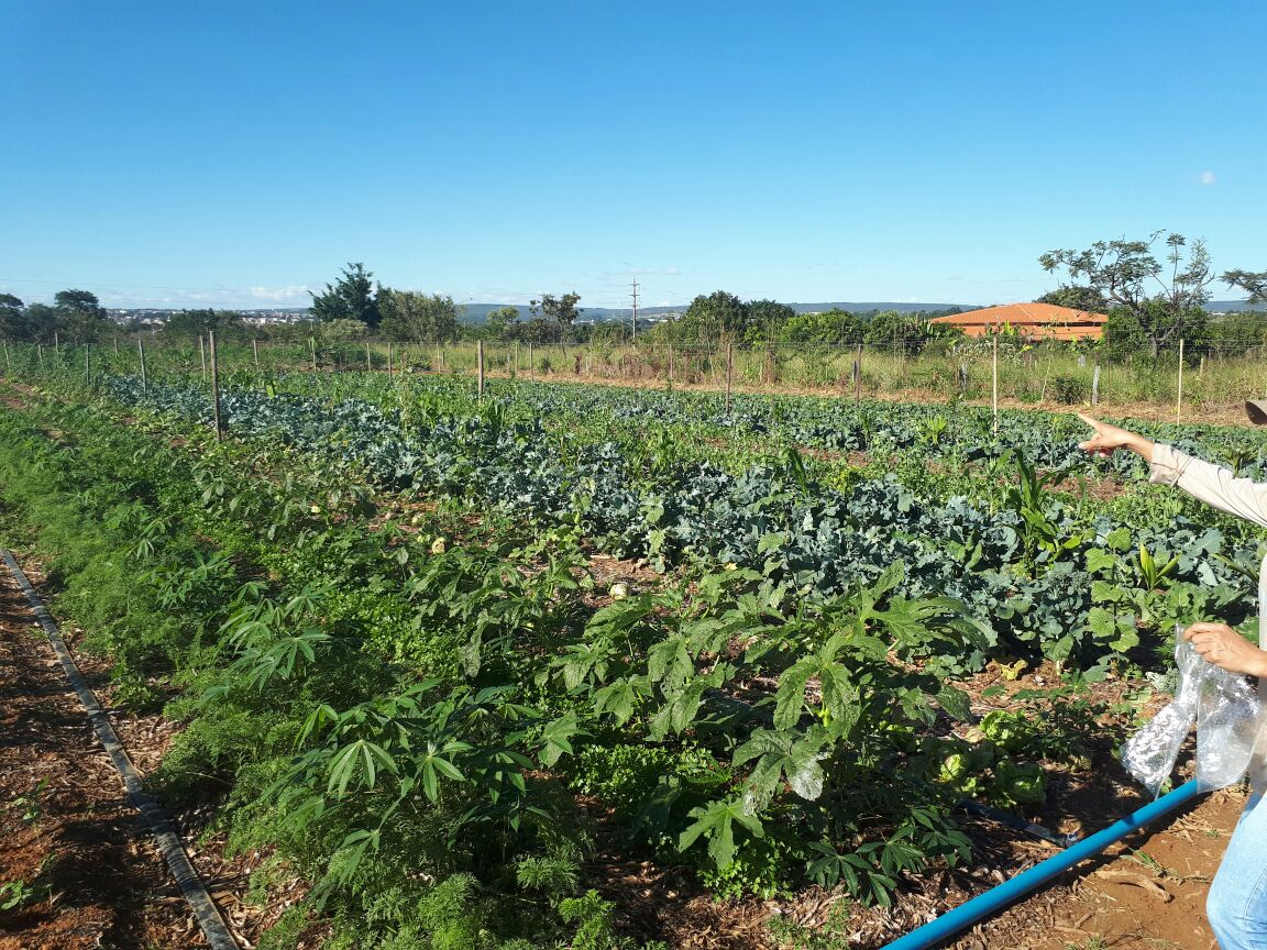 Agro - talhao 3 (6)