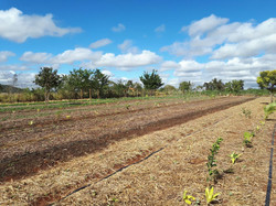 Agro - talhão 4 (4)