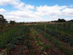 Agro - talhao 3 (10)