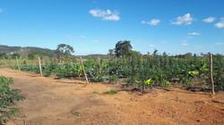 Agrofloresta (31)