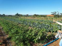 Agro - talhao 3 (13)
