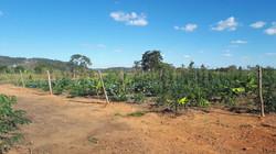 Agro - talhao 3 (5)