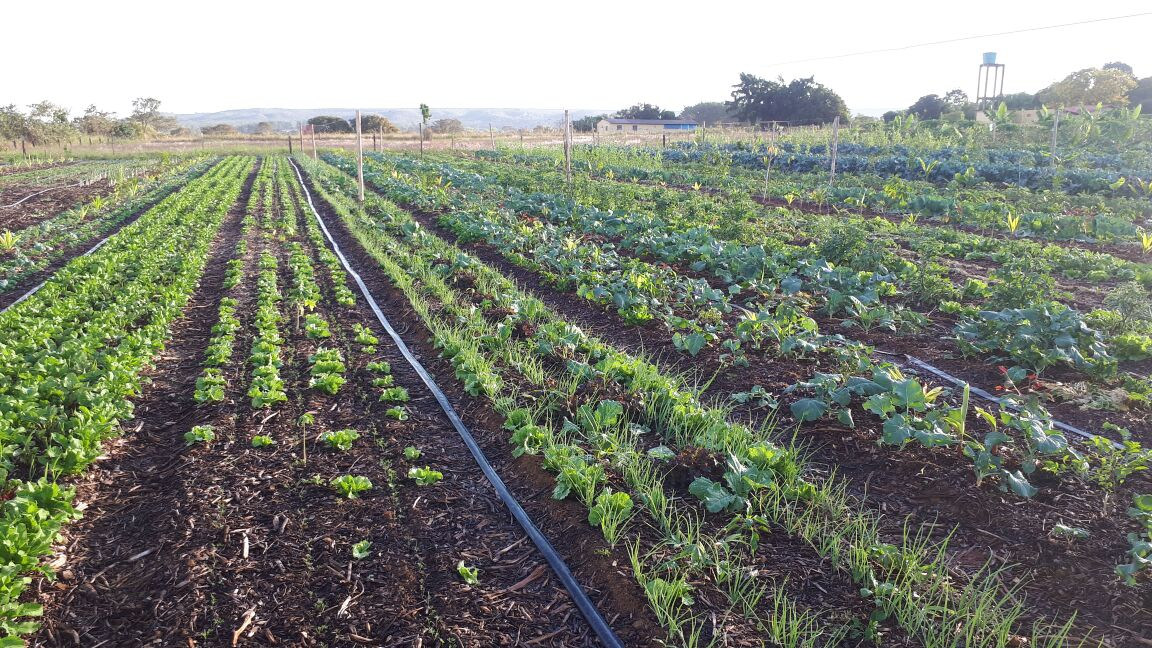 Agro - talhao 3 (16)