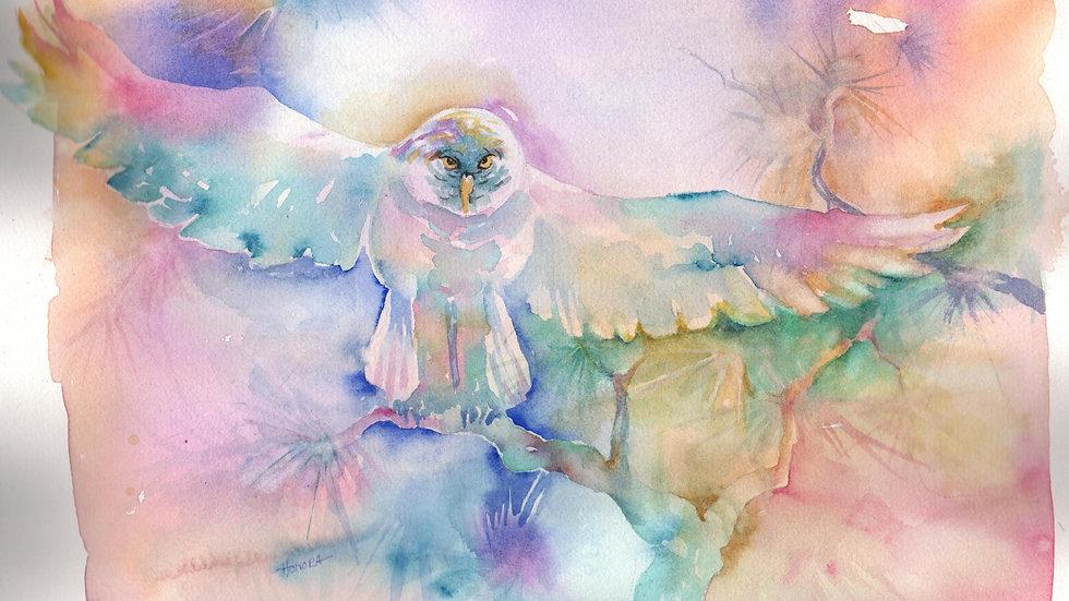 Great Gray Owl; British Columbia Canada