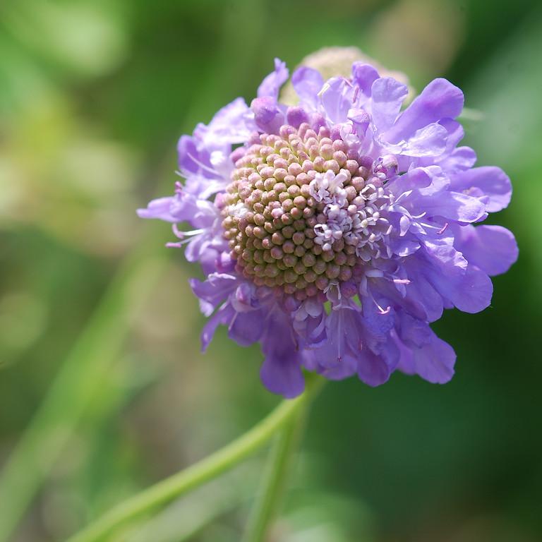 Wildflower Walk at Hendon Promenade