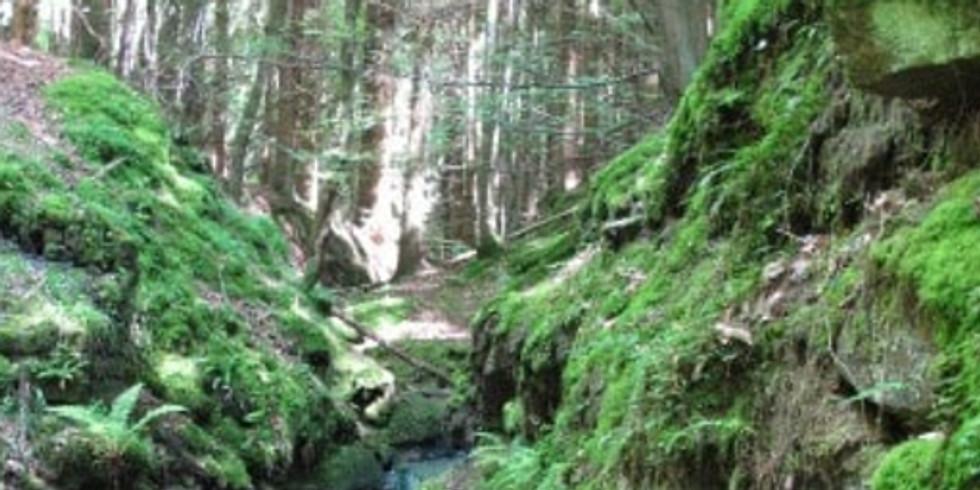 Milkwellburn Wood - Fungi and Ferns