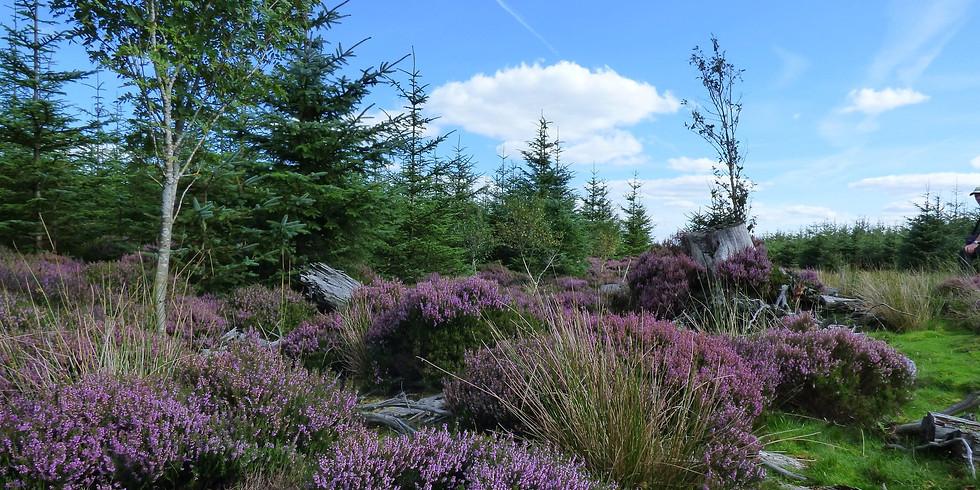 Ayhope Beck, Hamsterley Forest