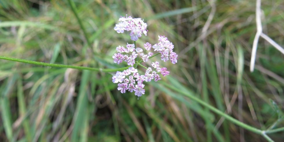 Grindon Sandhills Healing Nature site