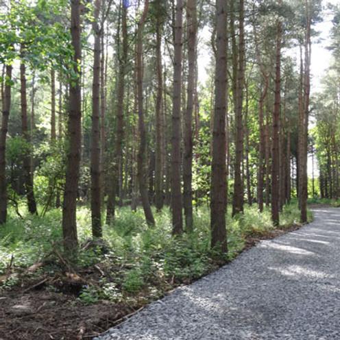Circular come and find walk New Brancepath / Esh Wood