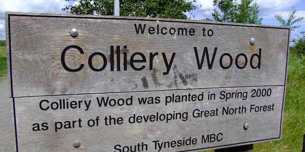 Colliery Wood, Boldon Colliery, South Tyneside