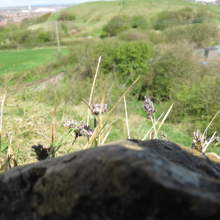 Wildflower & Butterfly walk at Sherburn Hill SSSI