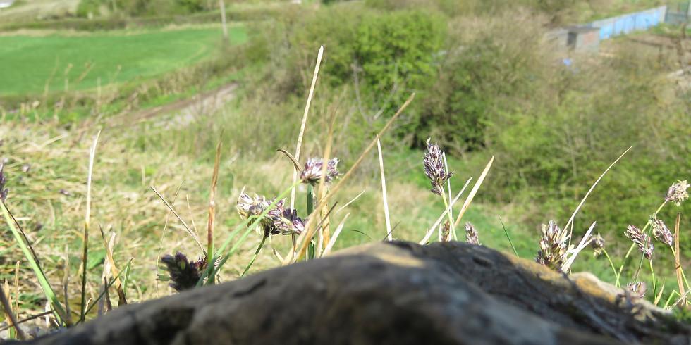 Wildflower & Butterfly walk at Sherburn Hill SSSI  1000-1200, 1300-1500: