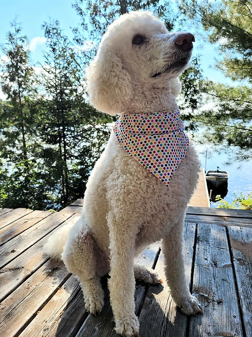 Party Dog Scarf
