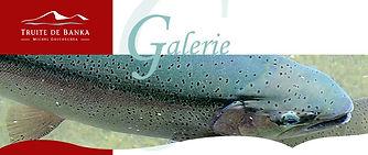 FERME Aquacole de BANKA 3.jpg