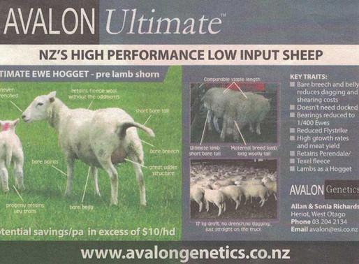 Avalon Ultimate Advert #3