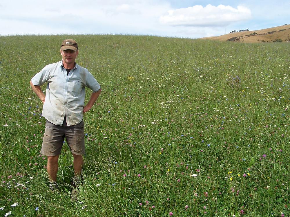 Allan Richardson of Avalon Genetics in a multi species organic pasture