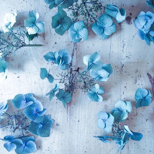 Dried hydrangeas to hold the colour of summer  a bit longer
