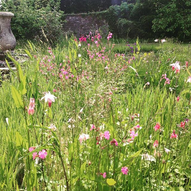 This is meant to be our kitchen garden, but my dream of a cutting flower patch is interfering with i